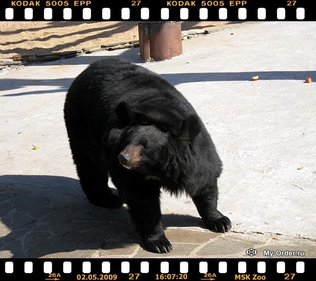 Zoo'09